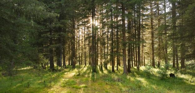 Экологический лесной фонд